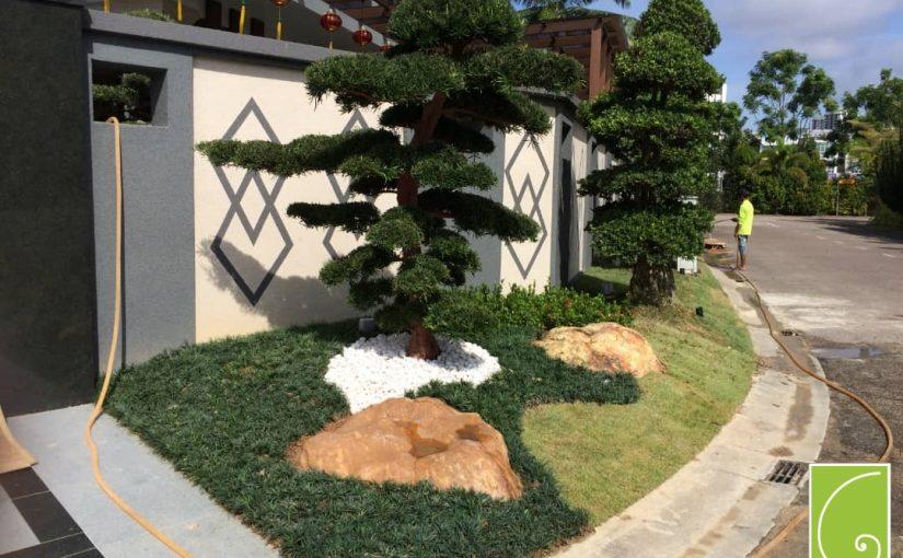 bonsai tree for your garden